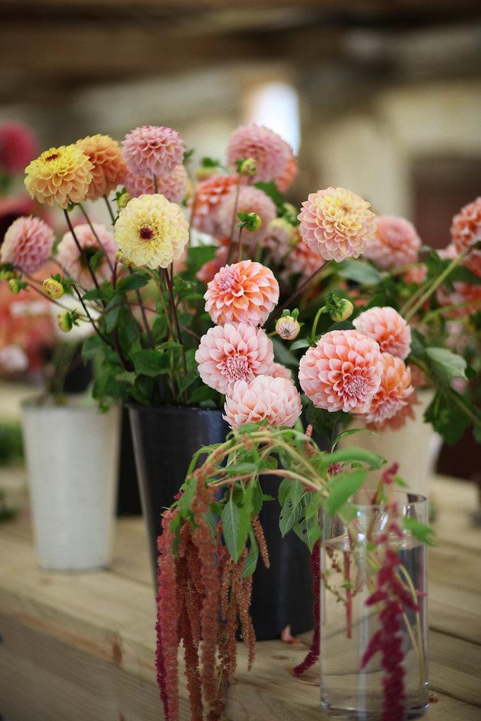 Flowers0146.jpg