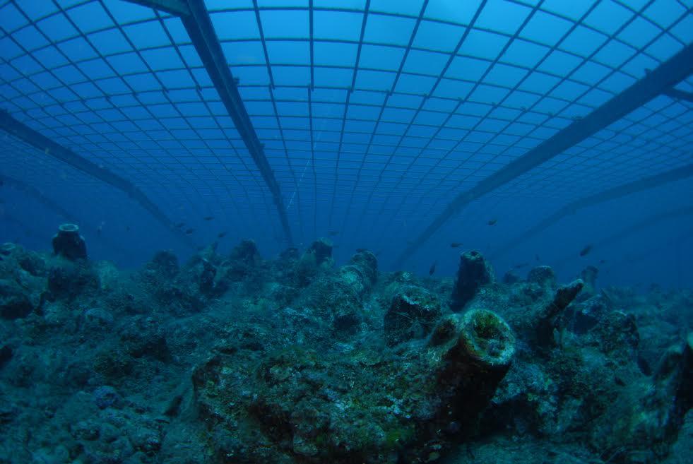 diving 1.jpg