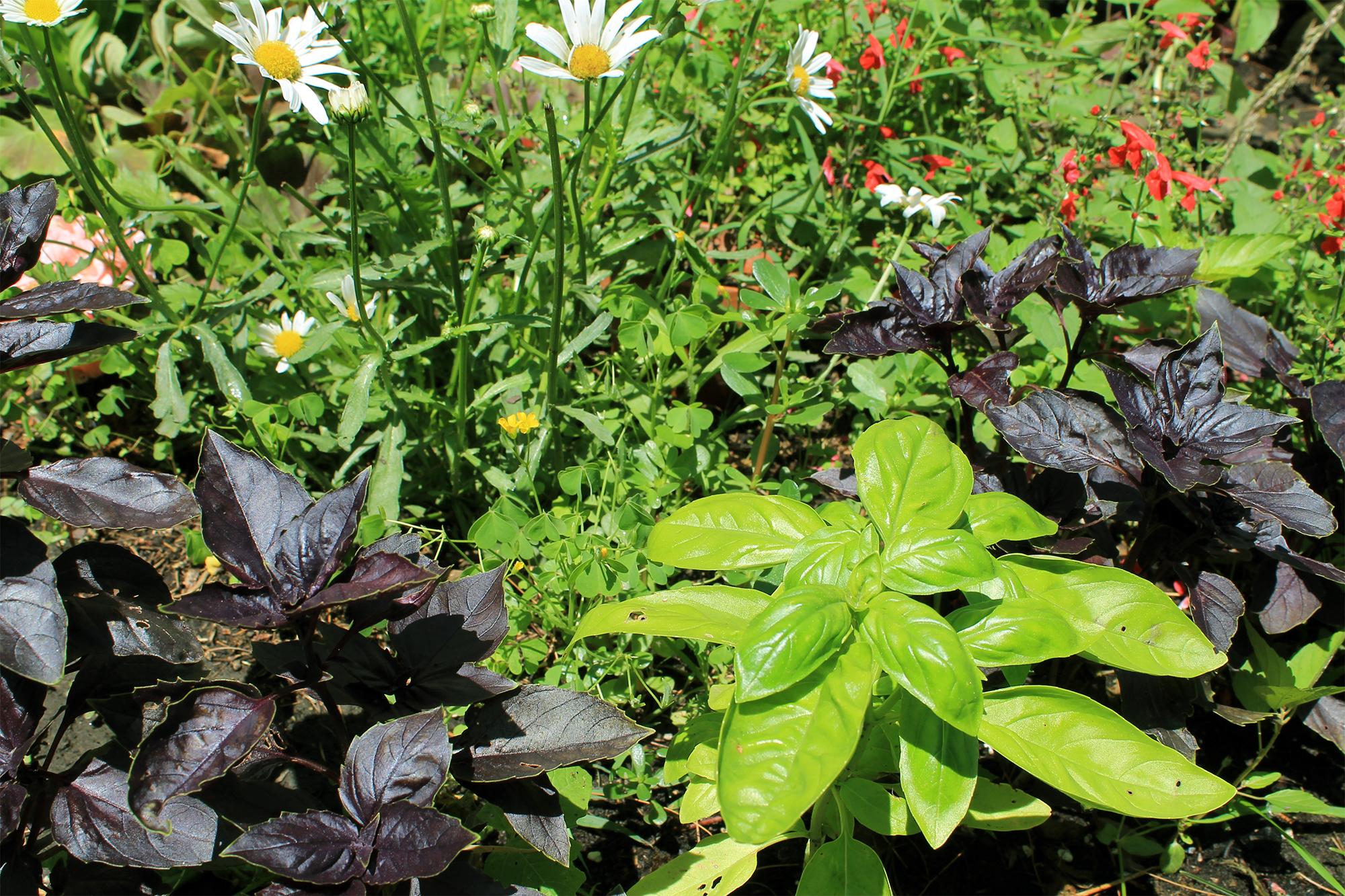 Edible Florida Gardening, Authentic Florida