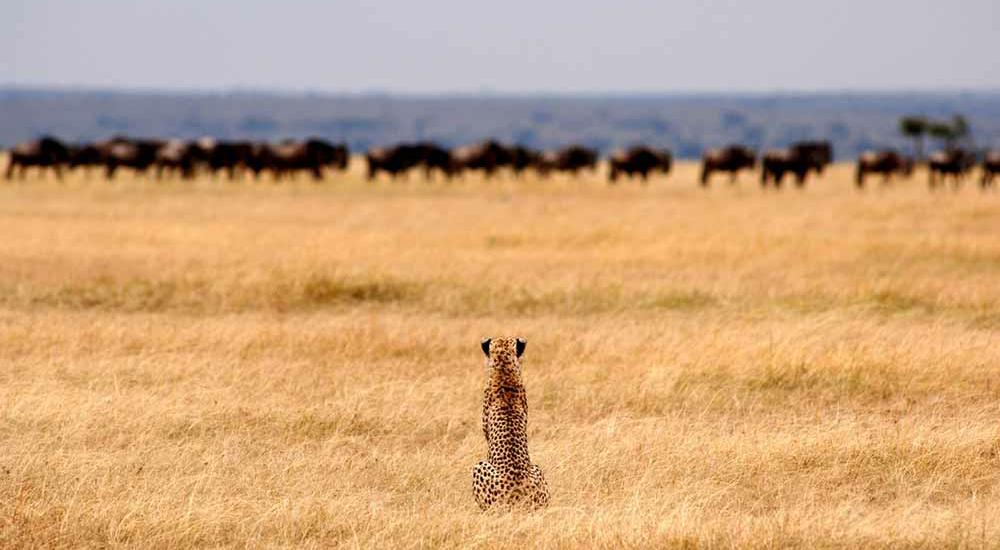 Serengeti Naitonal Park, Tanzania