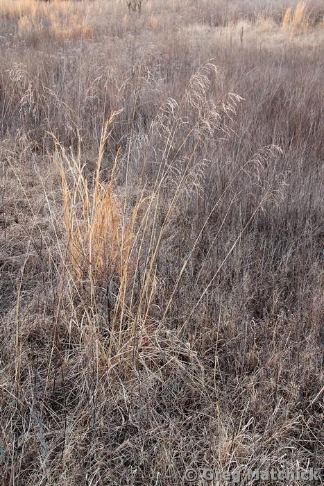 Sleeping Meadow 5