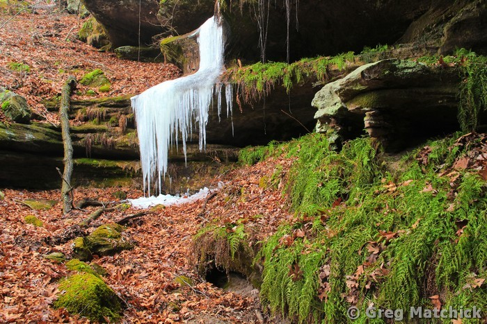Ice and Ferns In a Canyon at Pickle Springs