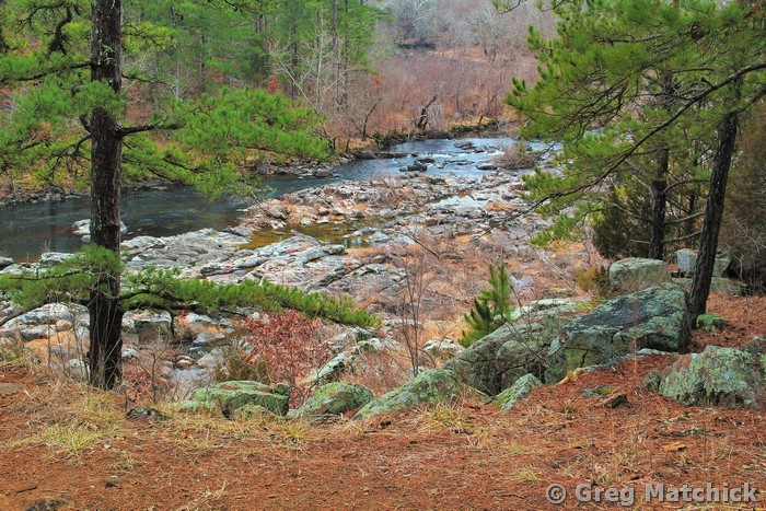 Pine Overlook on St Francis River 1
