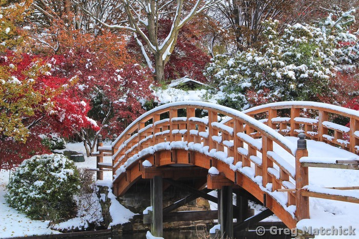 Drum Bridge in Autumn Snow 1
