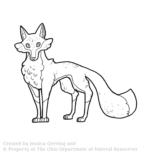 Red-Fox_ODNR_Jessica-Greving_2017.jpg