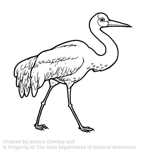 Sandhill-Crane-bird_ODNR_Jessica-Greving_2017.jpg