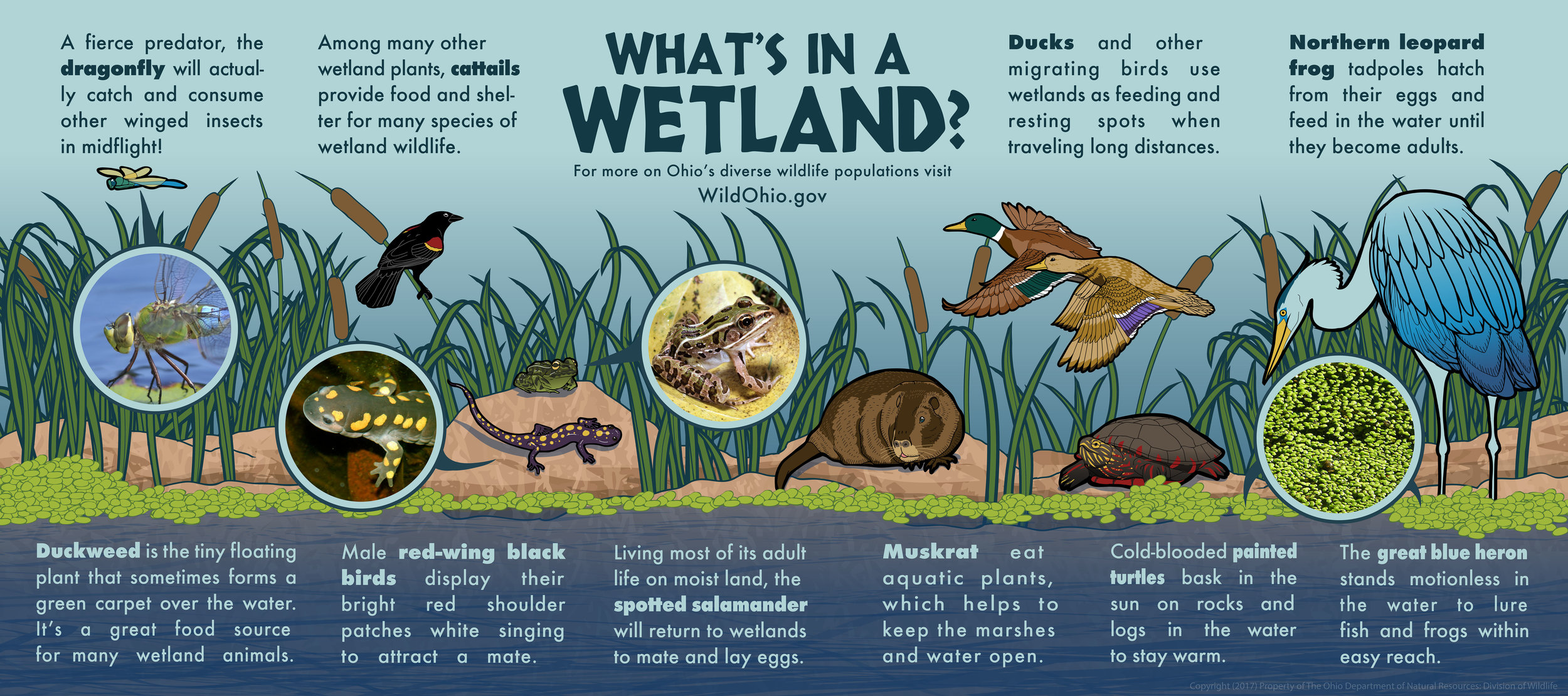 A poster I did which is on display in the pond area in front of the bird enclosures.