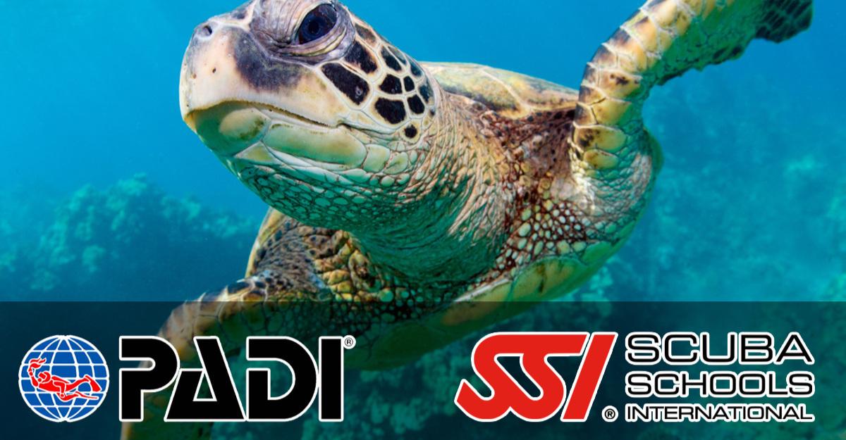 PADI+SSI+Diver+Belize.jpg