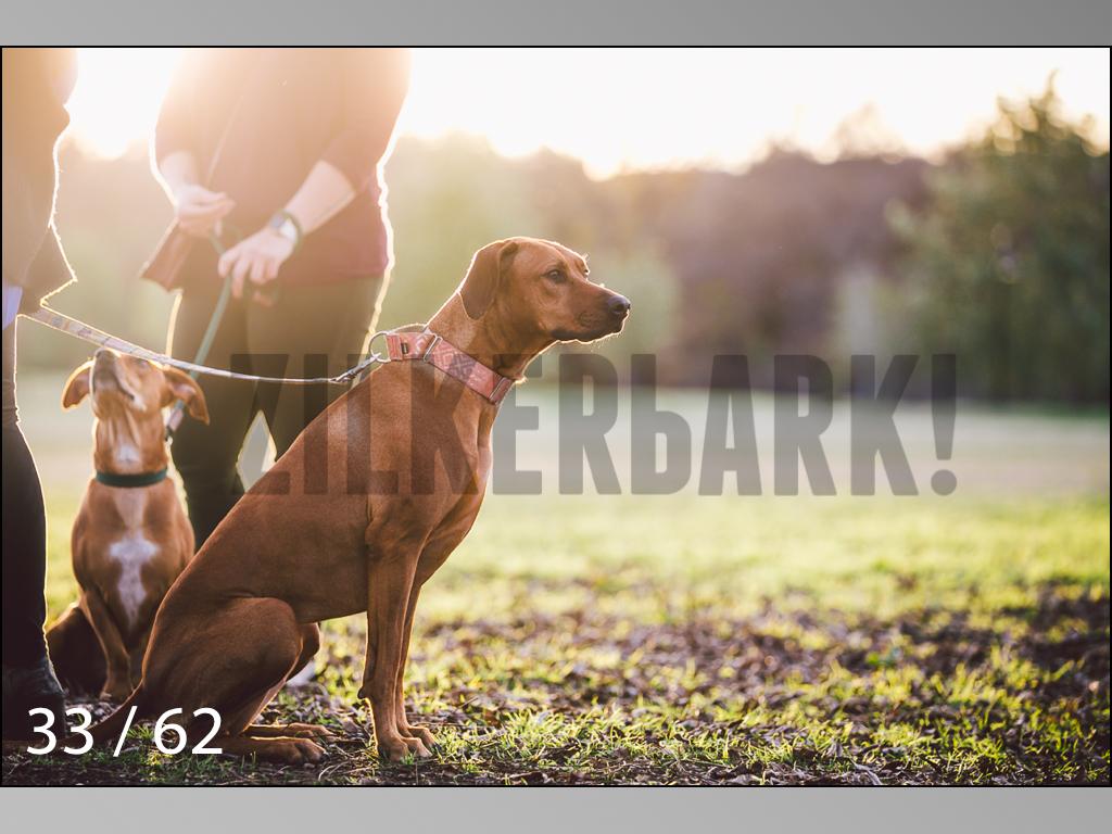 Ridgebacks Web Preview-33.jpg
