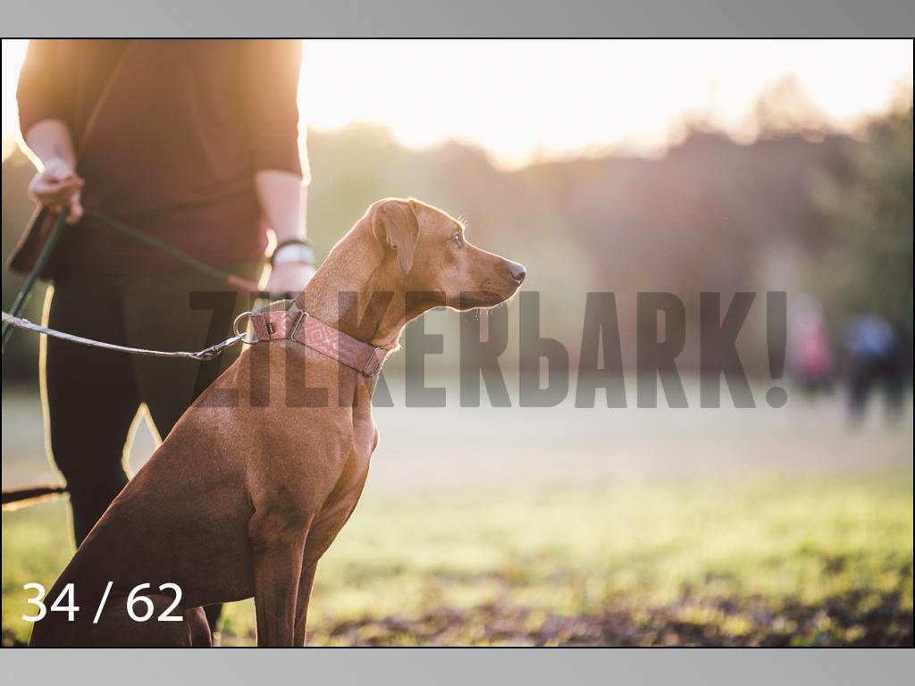 Ridgebacks Web Preview-34.jpg