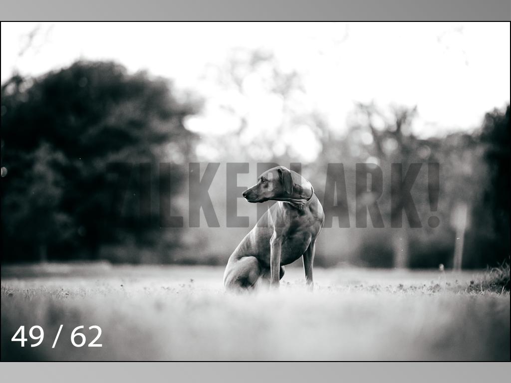 Ridgebacks Web Preview-49.jpg