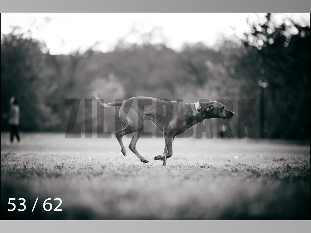 Ridgebacks Web Preview-53.jpg