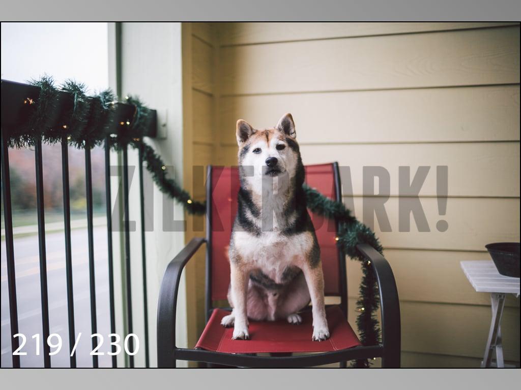 December Photos-219.jpg