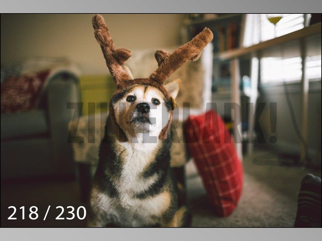 December Photos-218.jpg