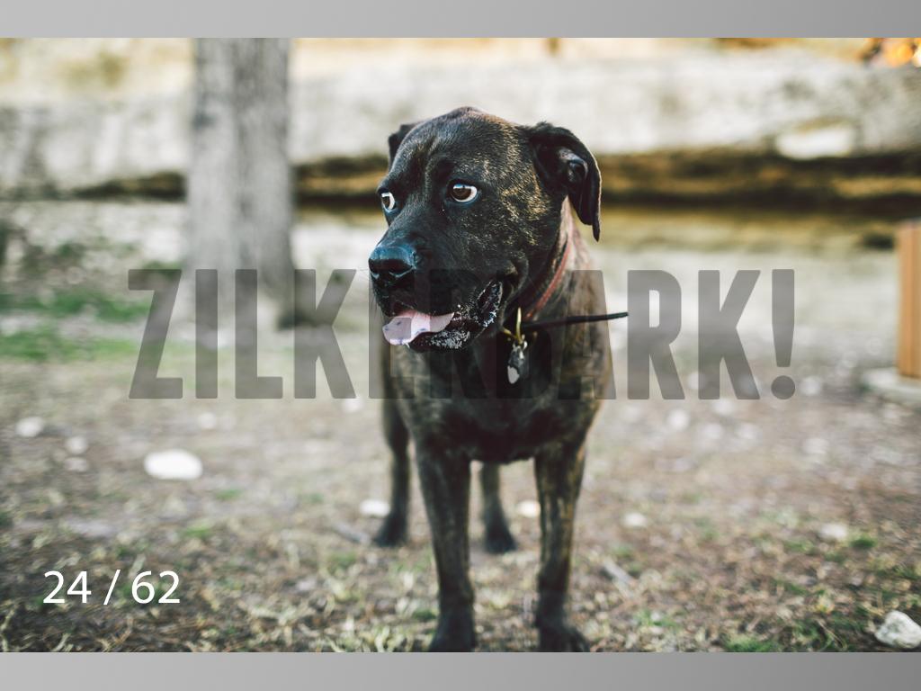 Frankie-24.jpg