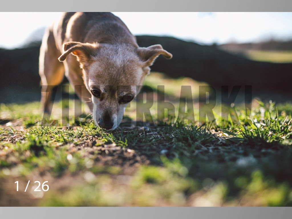 Nash and Rocko Web-01.jpg