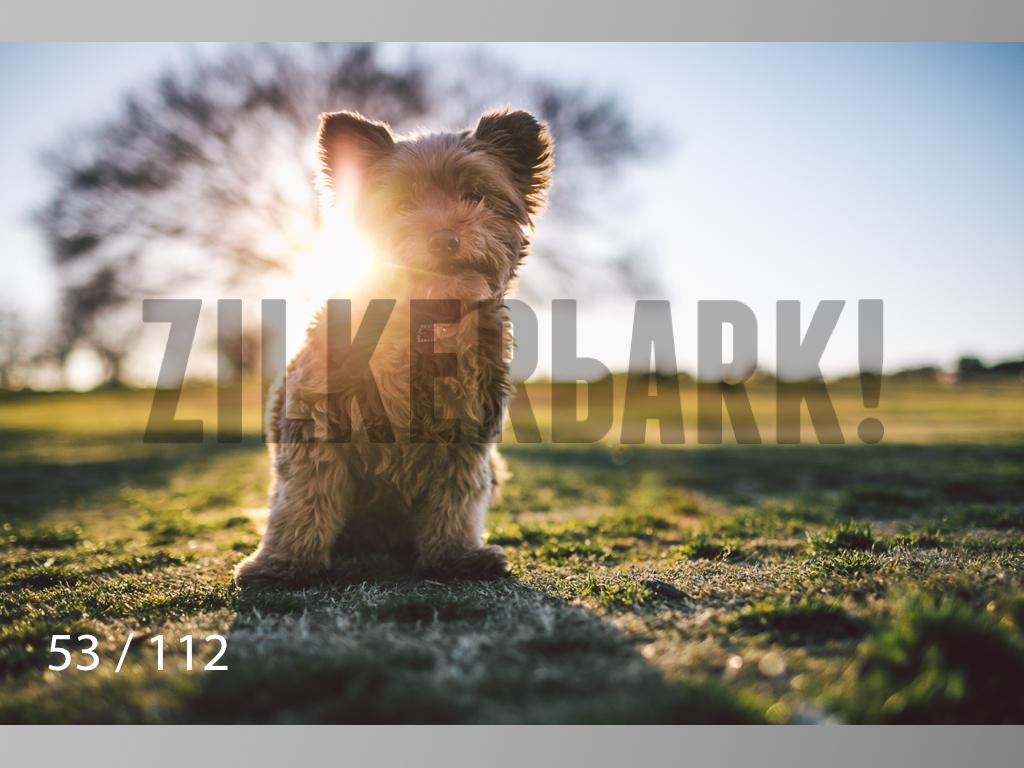 Dog Shoots-053.jpg
