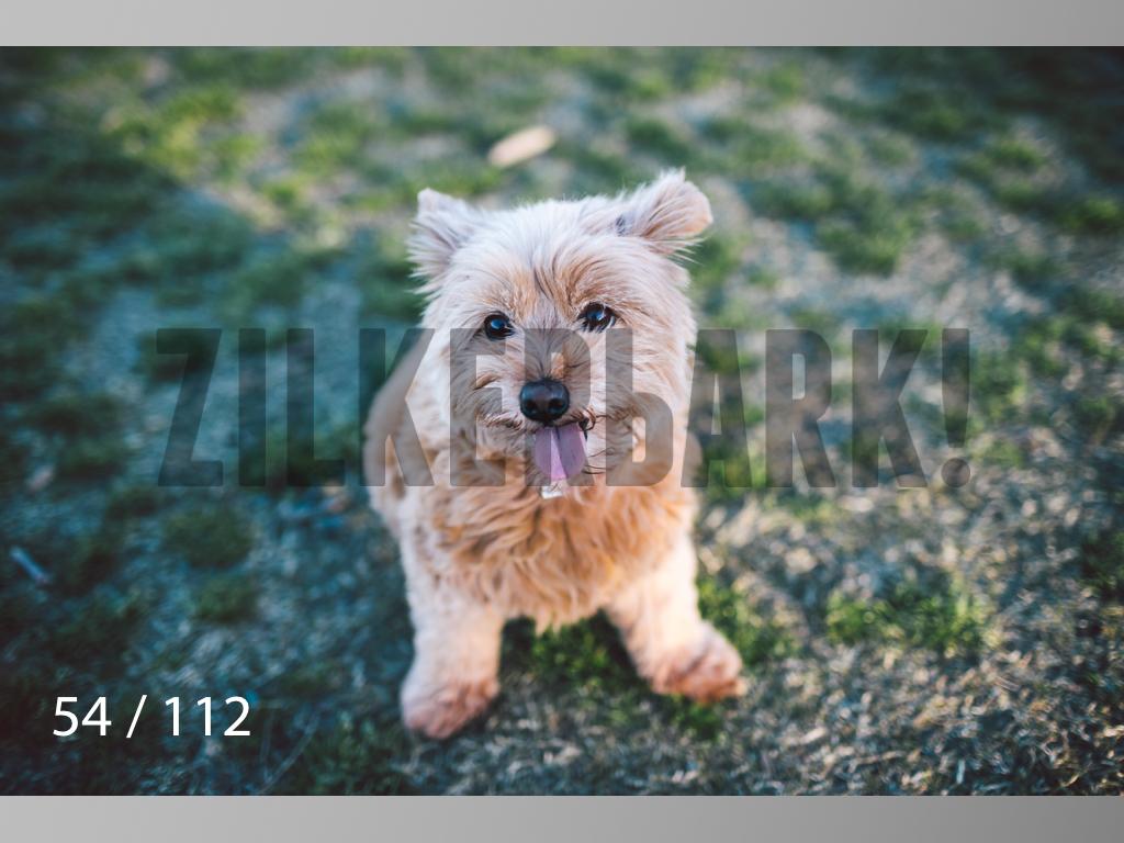 Dog Shoots-054.jpg