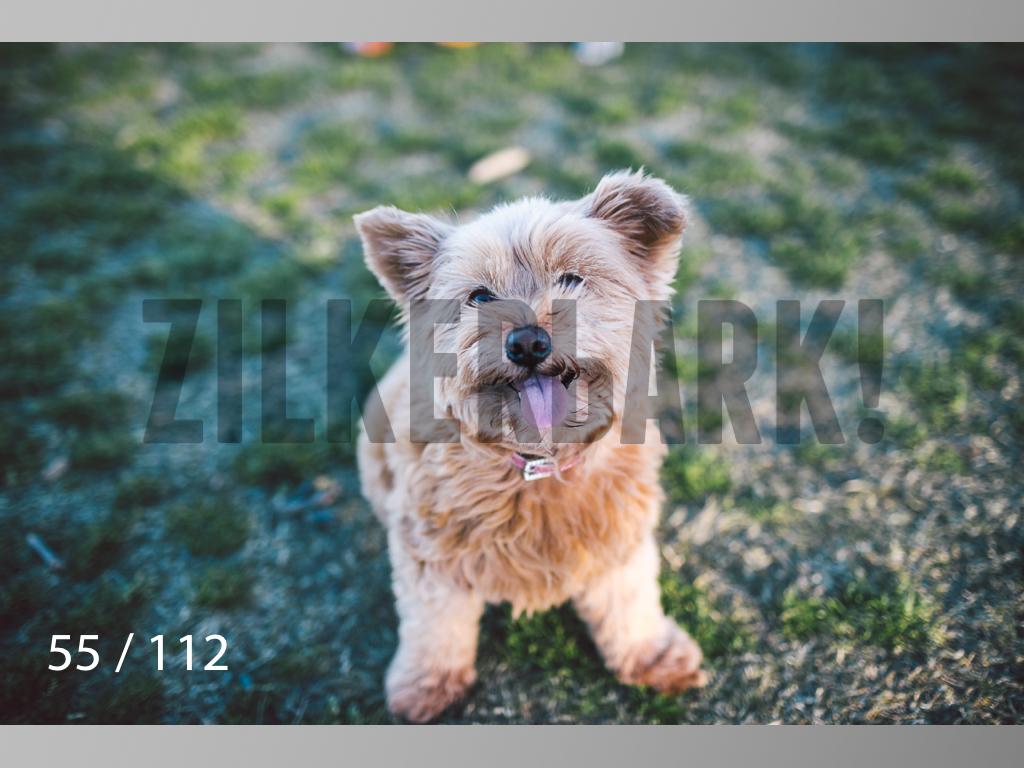 Dog Shoots-055.jpg