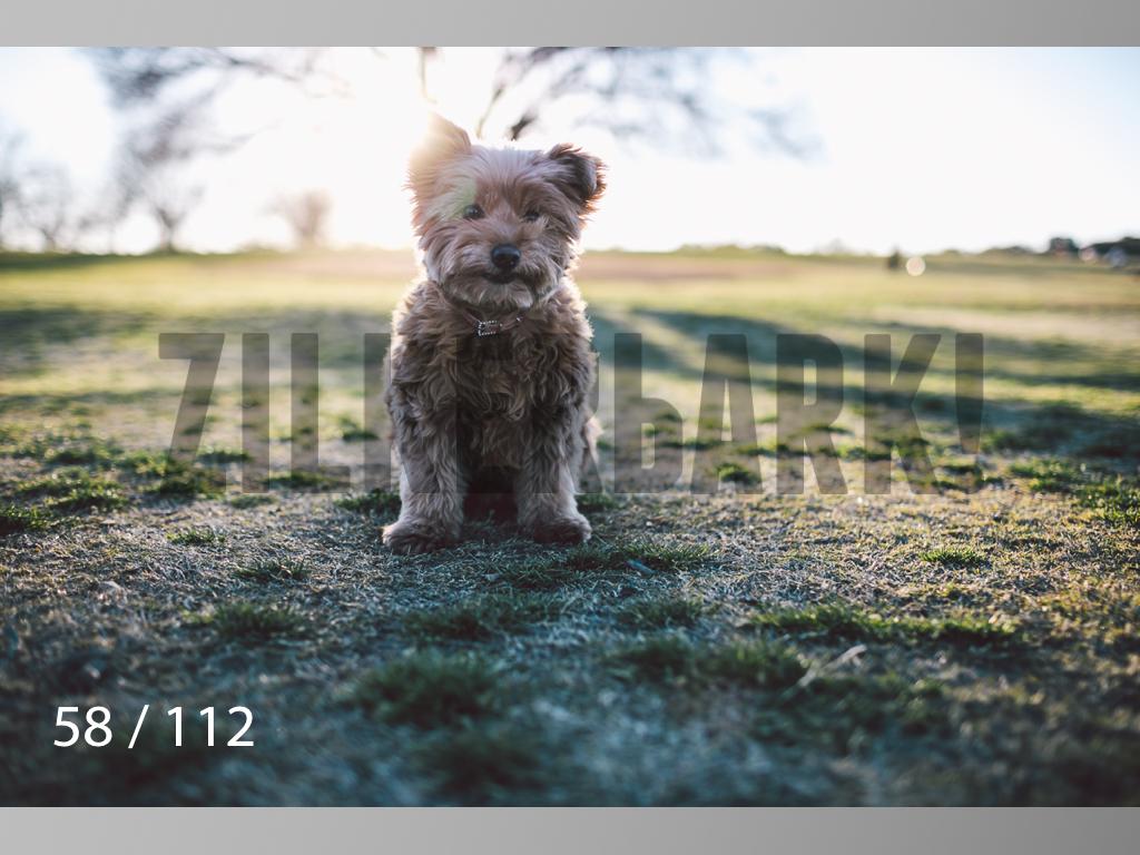 Dog Shoots-058.jpg