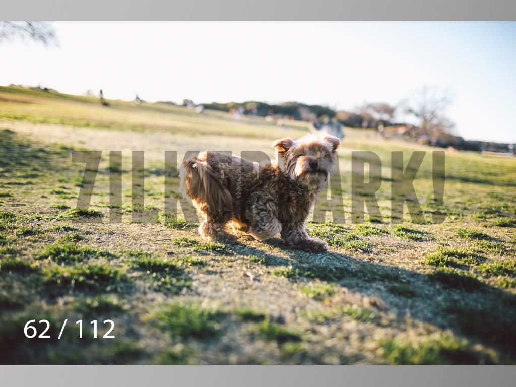 Dog Shoots-062.jpg