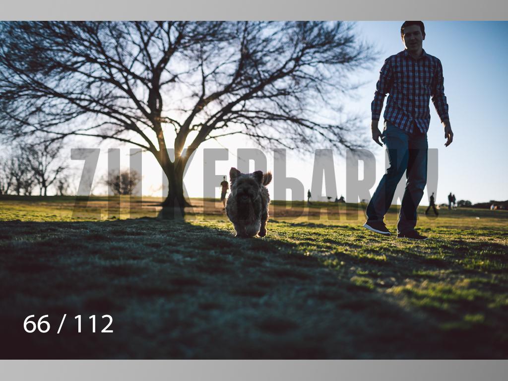 Dog Shoots-066.jpg