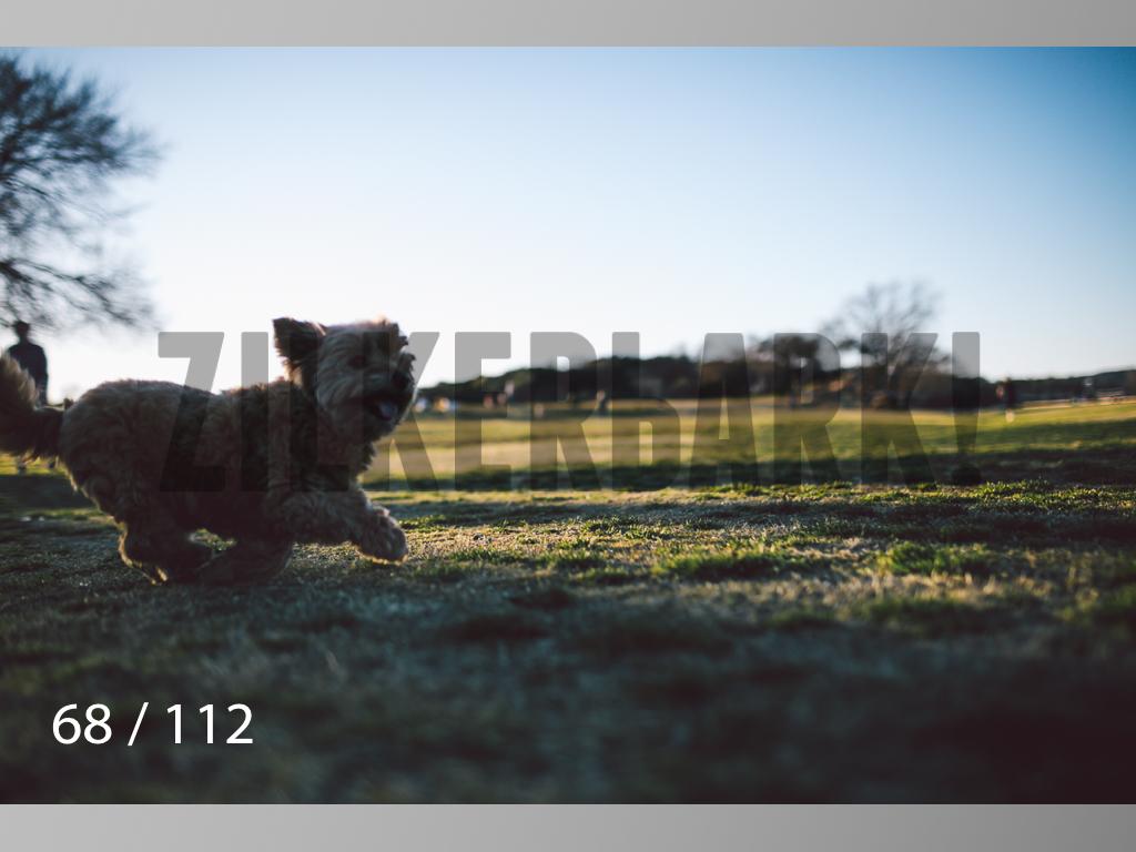 Dog Shoots-068.jpg
