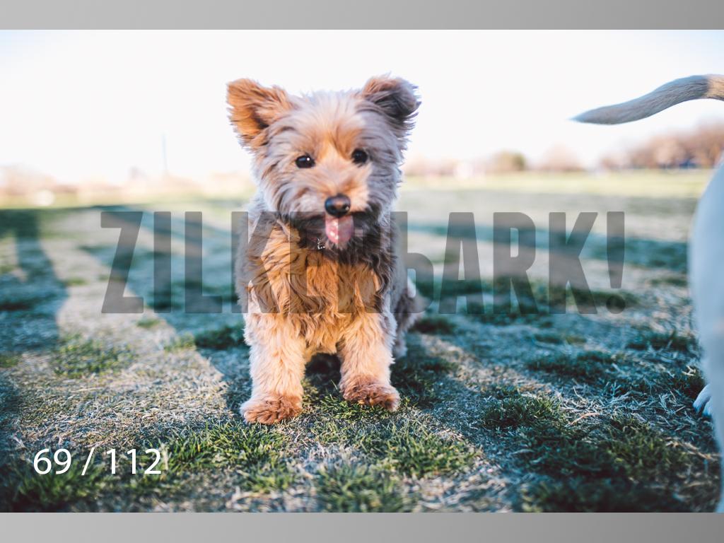 Dog Shoots-069.jpg
