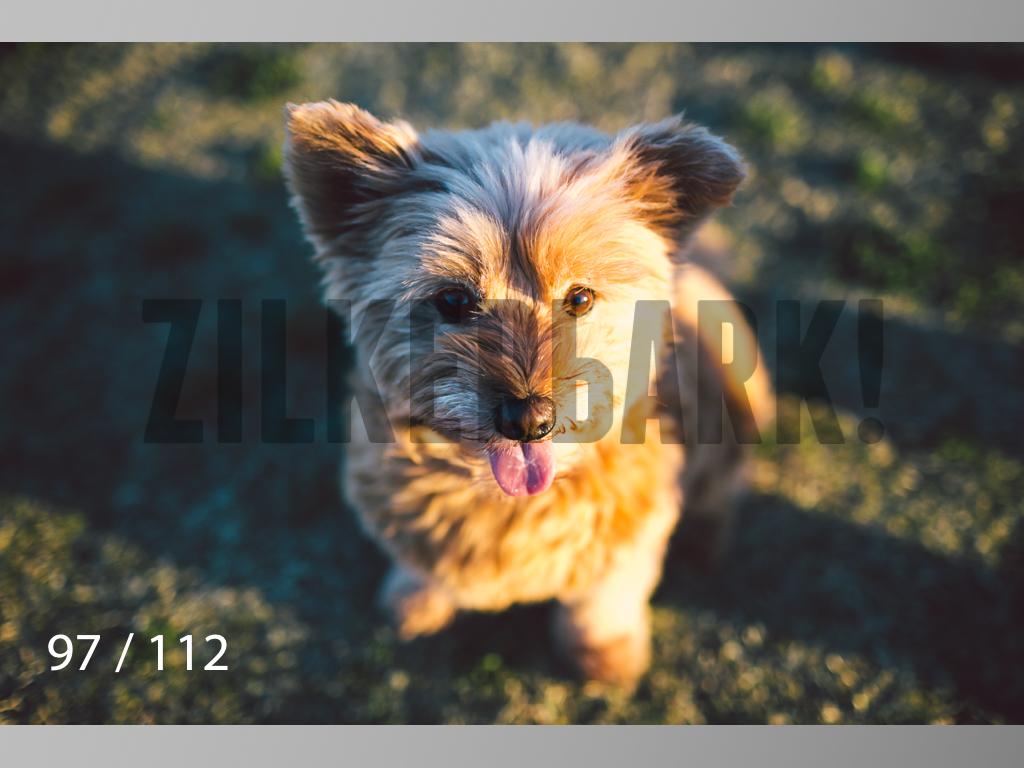 Dog Shoots-097.jpg