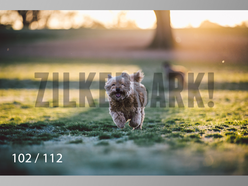 Dog Shoots-102.jpg
