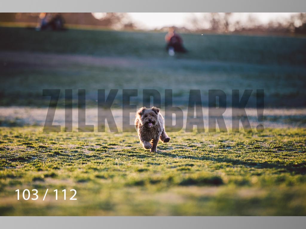 Dog Shoots-103.jpg