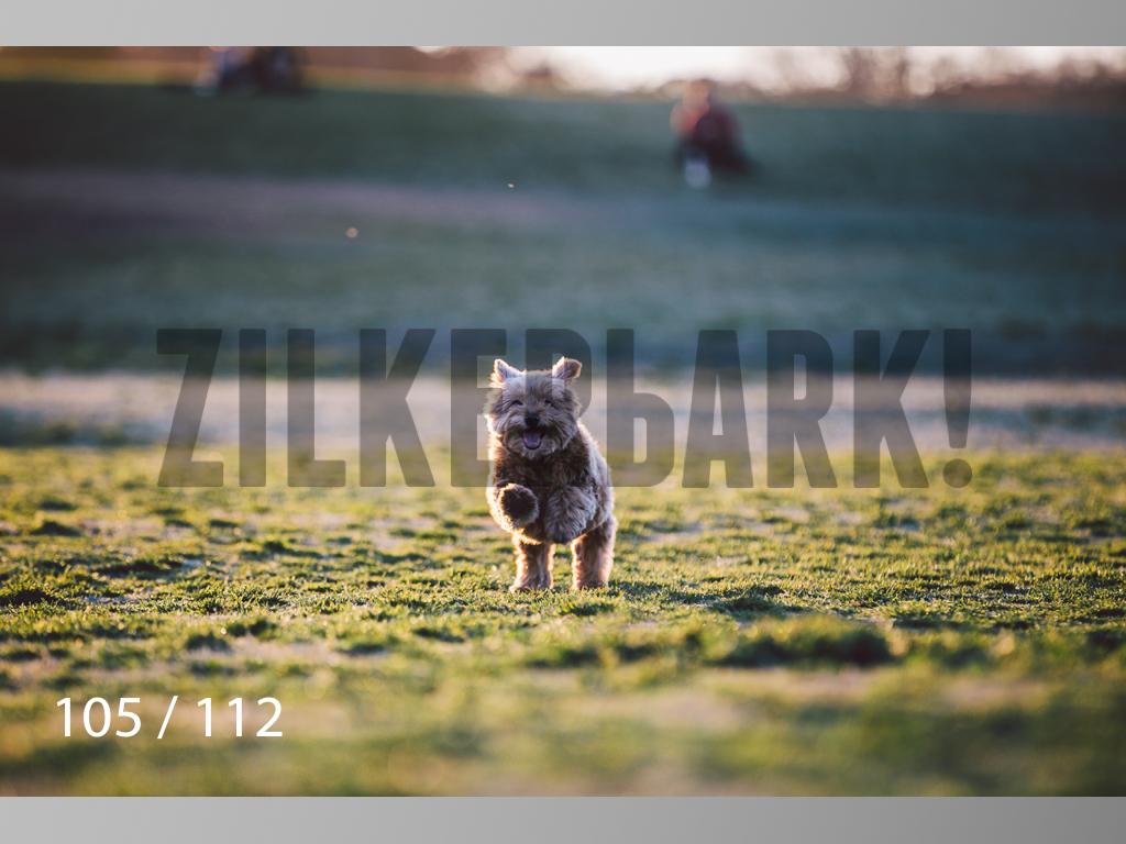 Dog Shoots-105.jpg