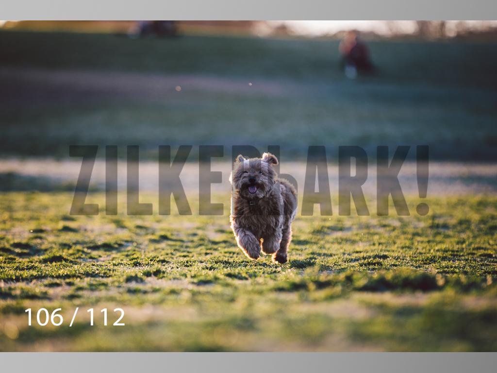 Dog Shoots-106.jpg