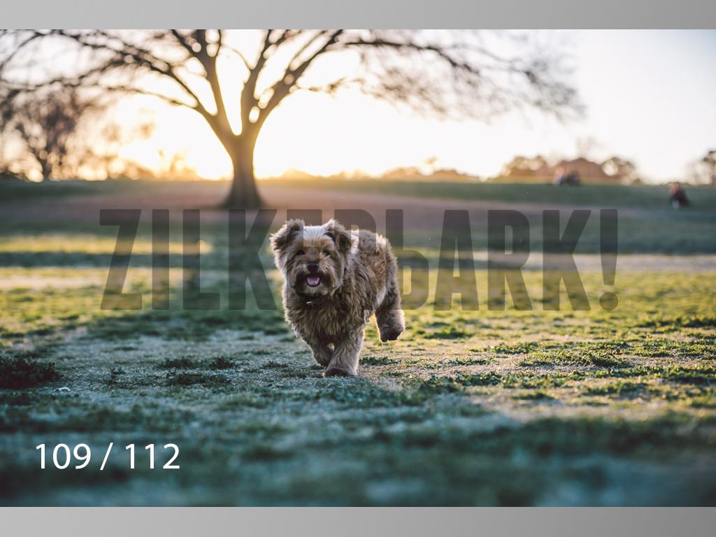 Dog Shoots-109.jpg