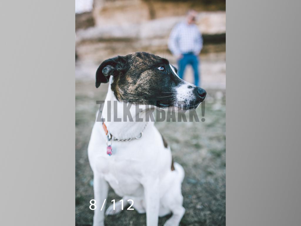 Dog Shoots-008.jpg