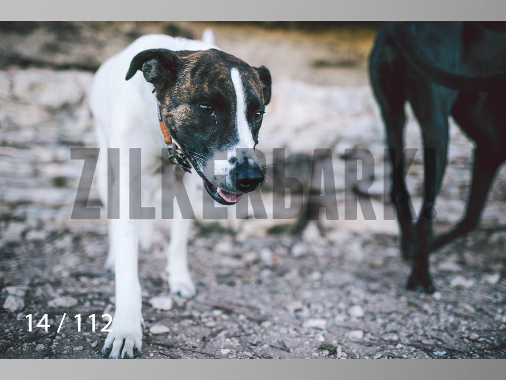 Dog Shoots-014.jpg