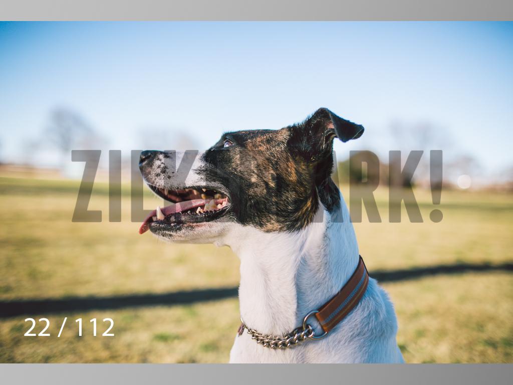 Dog Shoots-022.jpg
