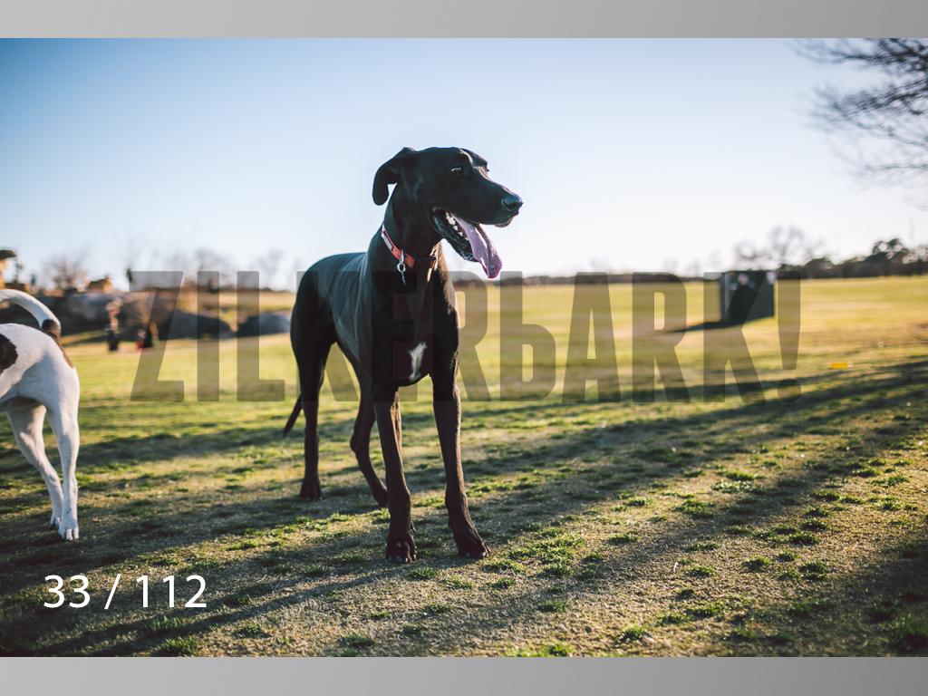 Dog Shoots-033.jpg