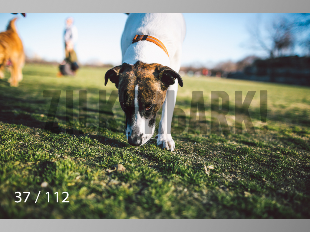 Dog Shoots-037.jpg