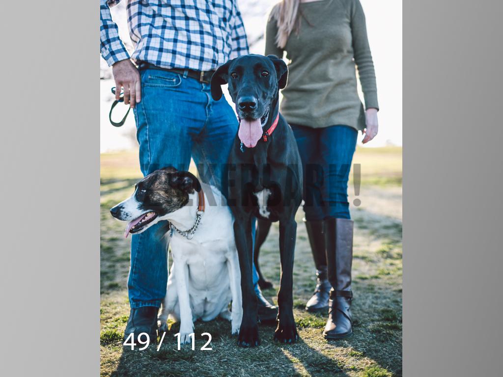 Dog Shoots-049.jpg