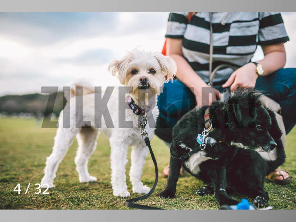 2.22 dogs-04.jpg