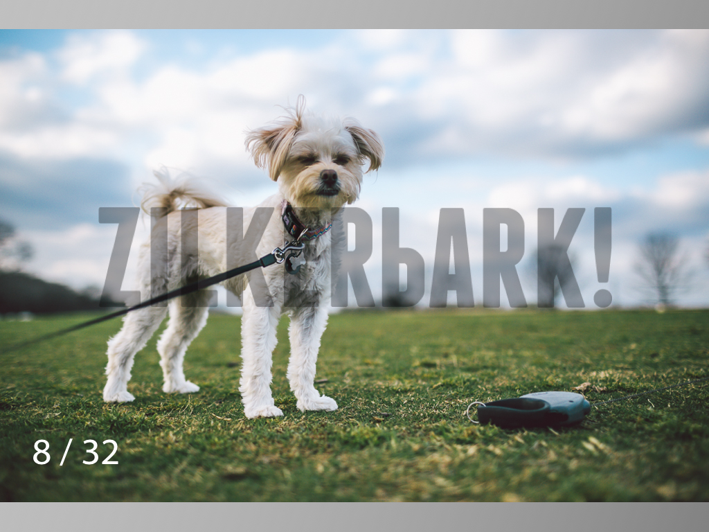 2.22 dogs-08.jpg