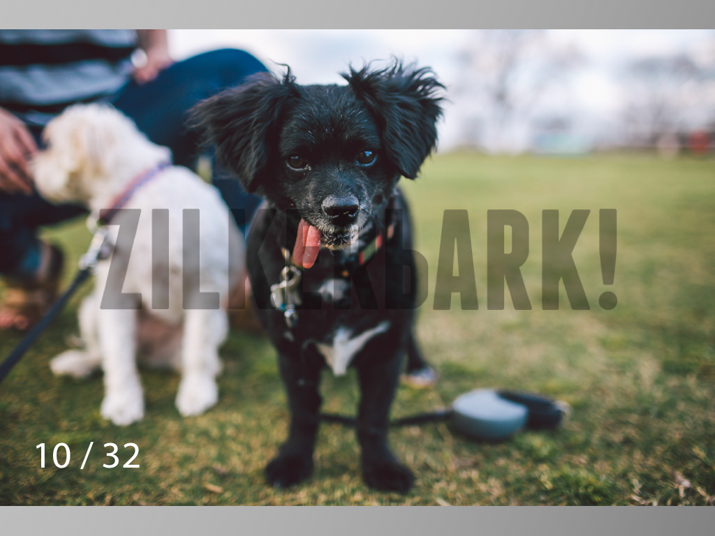 2.22 dogs-10.jpg