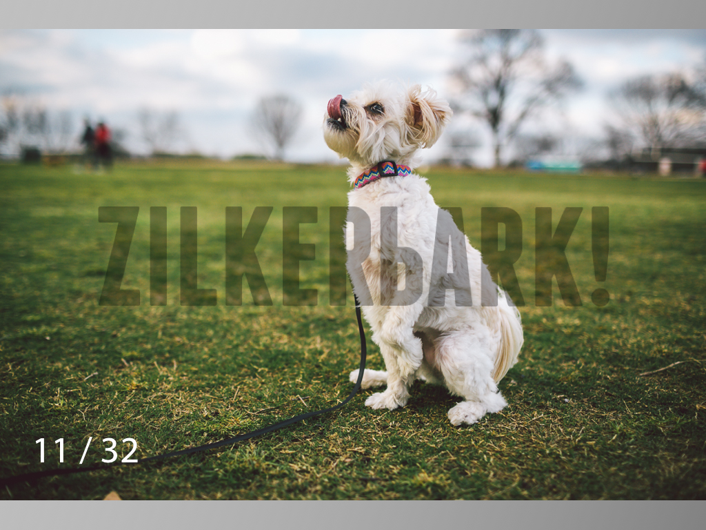 2.22 dogs-11.jpg