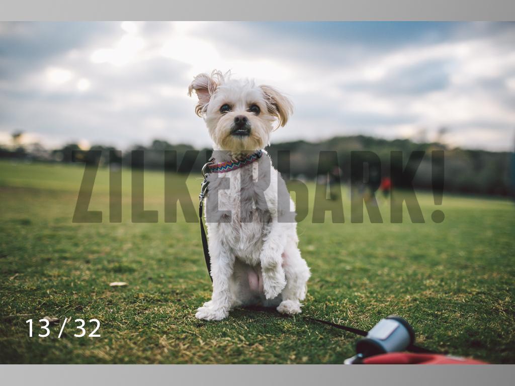 2.22 dogs-13.jpg