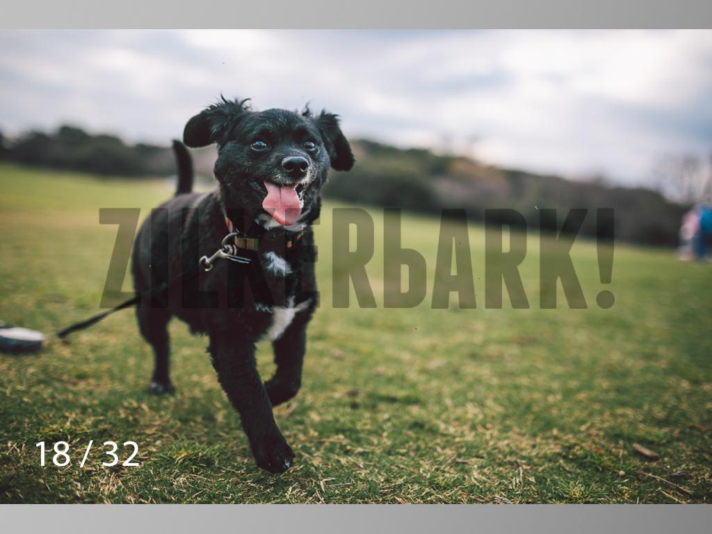 2.22 dogs-18.jpg