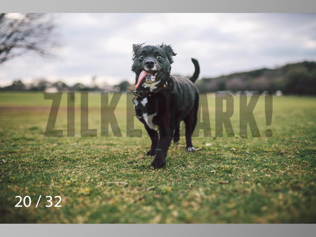 2.22 dogs-20.jpg