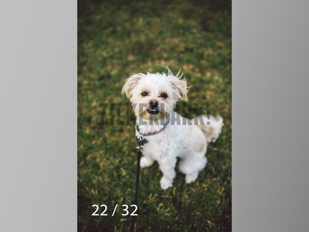 2.22 dogs-22.jpg