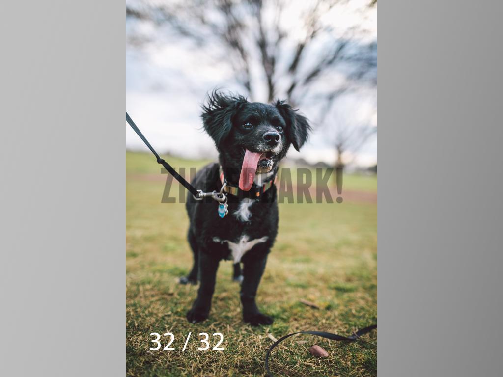 2.22 dogs-32.jpg