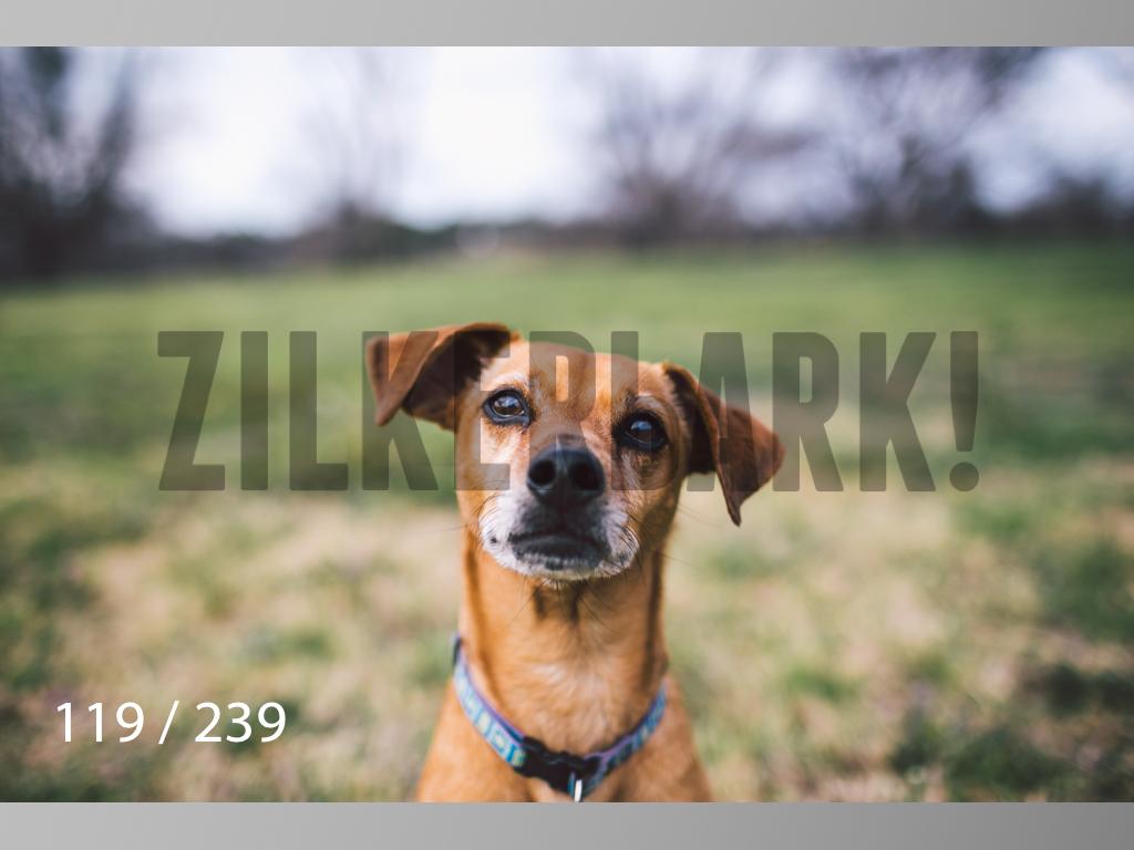 2.20 Dogs-119.jpg